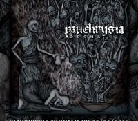 Panchrysia